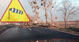 IMGW ostrzega przed porywistym wiatrem