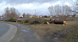 """Miasto traci drzewa. Czy to """"dobra zmiana""""?"""