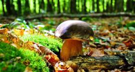 Uważaj w lesie aby się nie zgubić