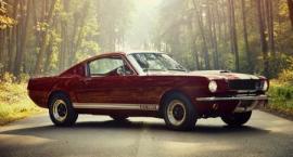 Mustang ze stajni Kościelaka