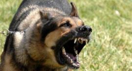 Bezpańskie psy atakują przechodniów