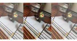 Komu uciekła papuga?