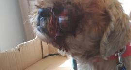 Ktoś uderzył suczkę aż wypadło jej oko, właścicielka prosi o pomoc