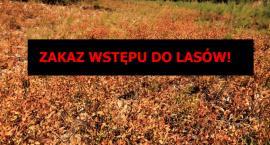 Zakaz wstępu do lasu - jest susza