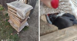 Ktoś podrzucił szczeniaki w drewnianych skrzyniach