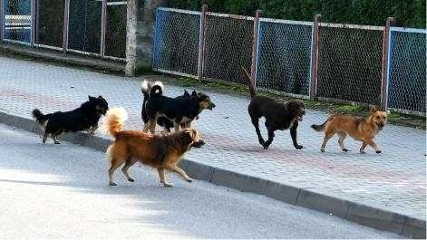 Z ostatniej chwili, odstraszają przed porzucaniem zwierząt Najgorzej lecie - zdjęcie, fotografia