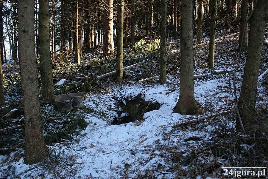 Z ostatniej chwili, wykopano lesie Piechowicach - zdjęcie, fotografia