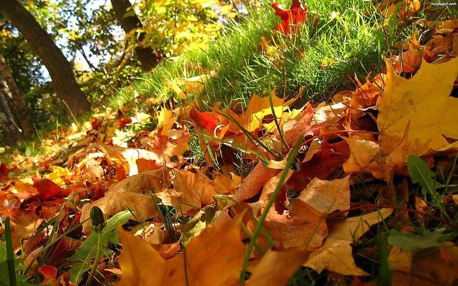 Ważne komunikaty, Jesienna zbiórka liści - zdjęcie, fotografia
