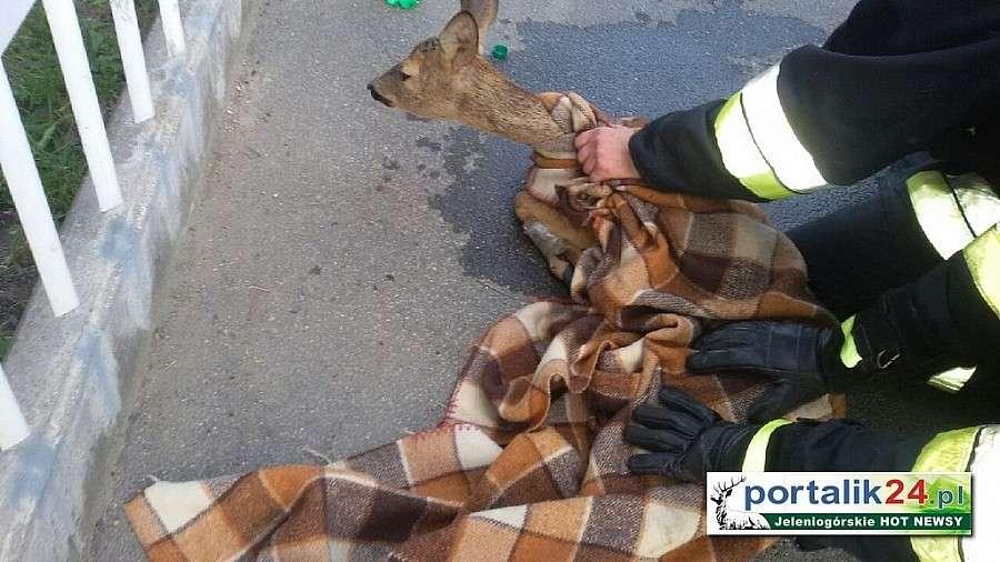 Zwierzęta, Rośnie ilość incydentów związanych dzikimi zwierzętami - zdjęcie, fotografia