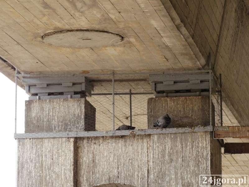 Zwierzęta, Śmiertelne pułapki gołębie - zdjęcie, fotografia