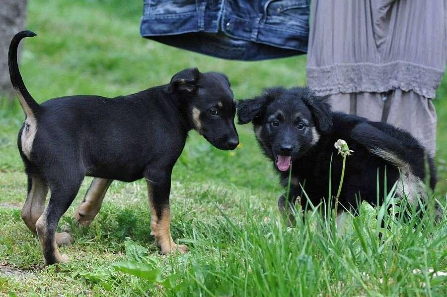 Zwierzęta, bąbelki gotowe adopcji! - zdjęcie, fotografia