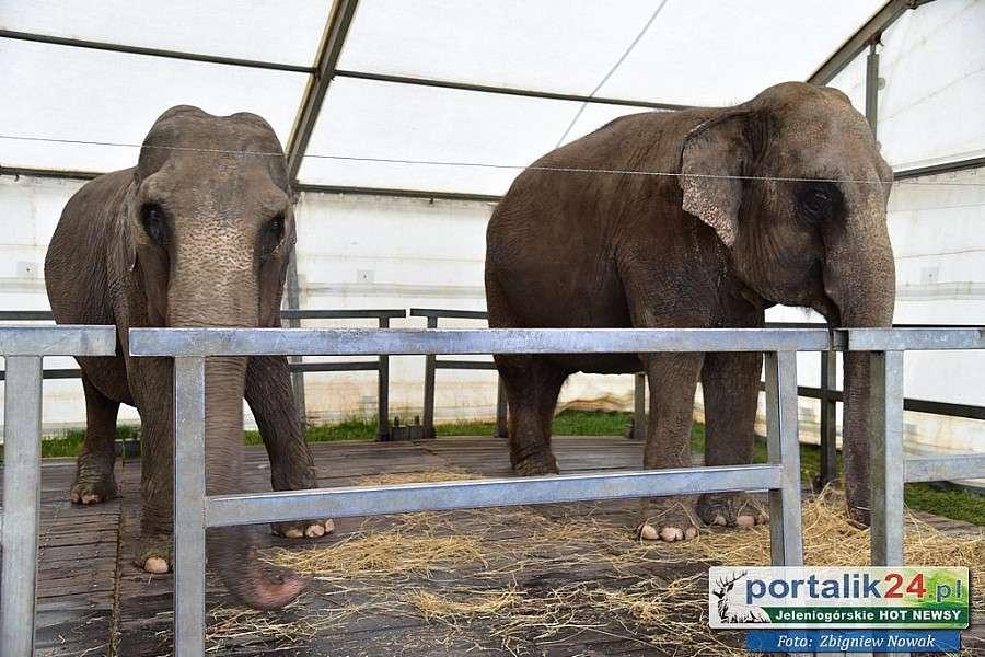 Zwierzęta, Wspaniały występ budzi wiele kontrowersji słusznie - zdjęcie, fotografia