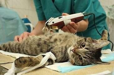 Zwierzęta, Bezpłatna sterylizacja kotów informacja mieszkańców - zdjęcie, fotografia