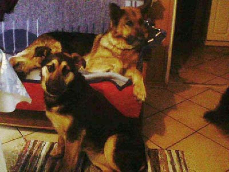 Zwierzęta, nagrody pomoc odnalezieniu - zdjęcie, fotografia
