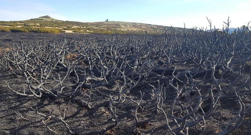 Pożary, Karkonosze wyglądają wielkim pożarze - zdjęcie, fotografia
