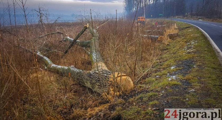 Samorząd, Dlaczego drogach wycinane drzewa - zdjęcie, fotografia
