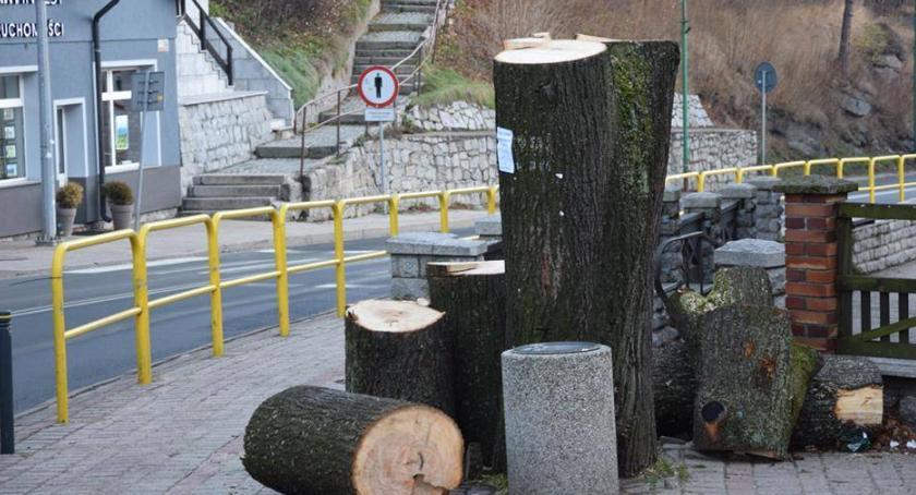 Samorząd, Mieszkańcy pytają Dlaczego ścięto zdrowe drzewo - zdjęcie, fotografia