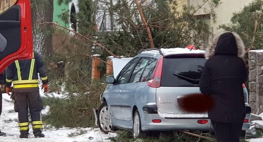 Wypadki drogowe, Peugeot uderzył drzewo szczęście nikogo było chodniku - zdjęcie, fotografia