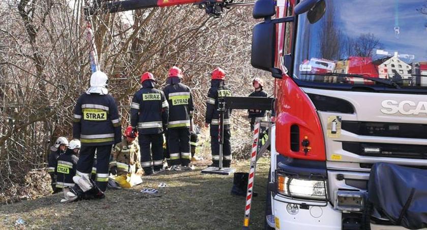 Interwencje, Krowa wpadła rzeki Wycieńczone zwierzę uratowali strażacy - zdjęcie, fotografia