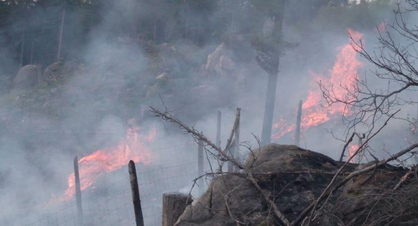 Pożary, Pożar okolicy Osiedla Łomnickiego - zdjęcie, fotografia