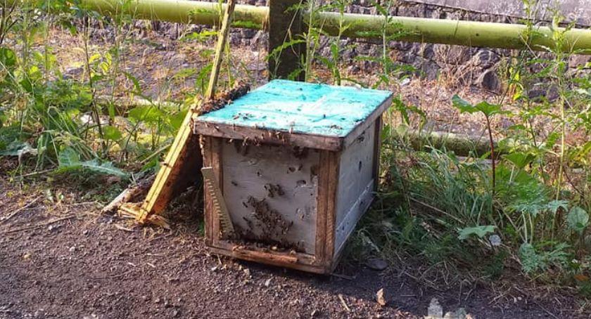 Kronika Kryminalna, Ukradł uciekał łupem pszczoły pożądliły turystów - zdjęcie, fotografia