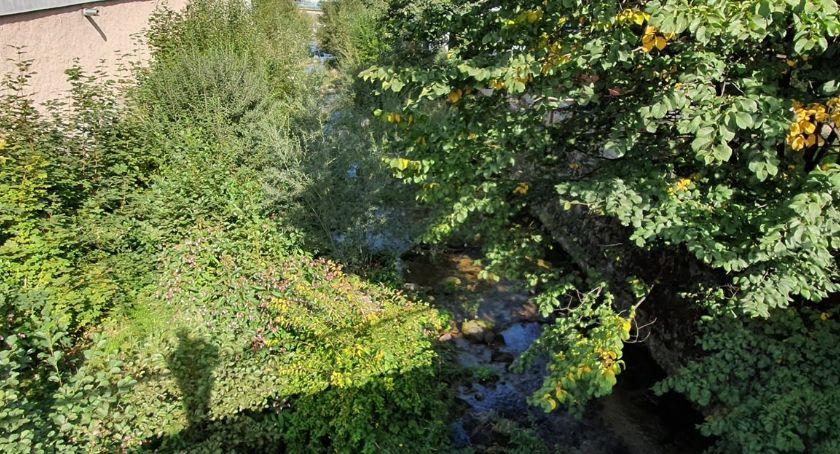 Absurdy, Rzeki zarastają krzakami drzewami Dlaczego - zdjęcie, fotografia