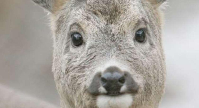 Zwierzęta, Dzikie zwierzęta coraz bliżej - zdjęcie, fotografia