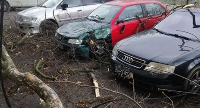 Interwencje, Mocno wieje Starej Kamienicy drzewo spadło samochody - zdjęcie, fotografia