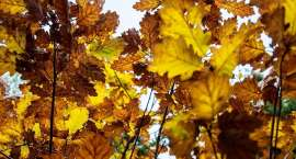 Ogród Botaniczny w barwach jesieni