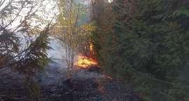 Pożar traw w Jeżowie Sudeckim