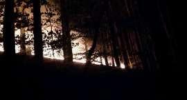 Plaga pożarów - płonęły łąki w Piechowicach