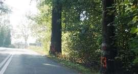 Ponad 200 przydrożnych drzew do wycinki
