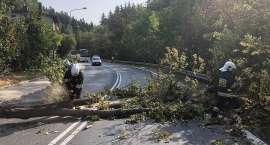 Szklarska Poręba : Drzewo zagrażało bezpieczeństwu kierowców