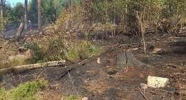 Pożar lasu na Wzgórzu Gapy