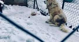 Zaniedbany pies w Jakuszycach