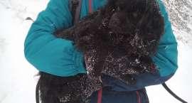 Zbłąkany pies w drodze na Śnieżkę