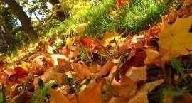 Jesienna zbiórka liści