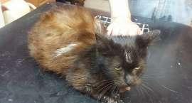 Potrzebne wsparcie na leczenie chorych zwierząt