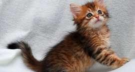 Przeprowadzono 150 zabiegów sterylizacji/kastracji kotów