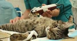 Bezpłatna sterylizacja kotów - informacja dla mieszkańców