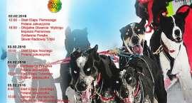 Nie będzie wyścigu psich zaprzęgów w Szklarskiej Porębie