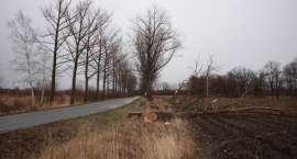 Wycinka drzew w Sobieszowie