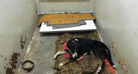 Uratowali psa potrąconego przez samochód