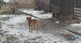 Jelenia Góra : Porzucony pies na Zjednoczenia Narodowego