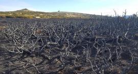 Karkonosze – tak wyglądają po wielkim pożarze.