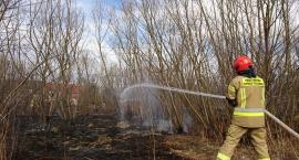 Duży pożar traw w Cieplicach