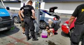 W słoneczny dzień zostawił psy zamknięte w samochodzie