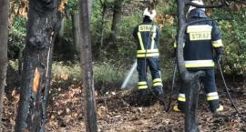 Pożar ściółki leśnej w Szklarskiej Porębie