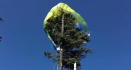 Paralotniarka zawisła na drzewie