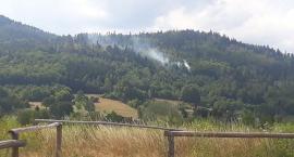 Pożar lasu w Miłkowie
